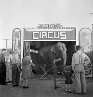 0623932 © Granger - Historical Picture ArchiveCIRCUS: ELEPHANT, 1942.   An elephant at the circus in Klamath Falls, Oregon. Photograph by Russell Lee, July 1942.