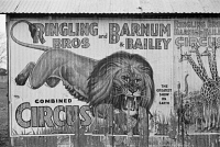 0623935 © Granger - Historical Picture ArchiveCIRCUS POSTER, 1936.   Poster for Ringling Bros. and Barnum & Bailey circus on the side of a builing in Alabama. Photograph by Walker Evans, 1936.
