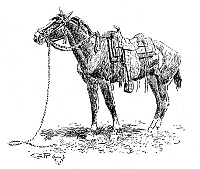 0070832 © Granger - Historical Picture ArchiveRUSSELL: RAWLINS' HORSE.   Drawing by Charles M. Russell (1864-1926).