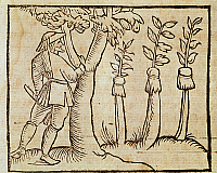 0430129 © Granger - Historical Picture ArchiveFINE ART.   Grafting the trees, illustration from De Agricoltura Vulgare, by Pier Crescenzio (1233-1320), edition published in Venice, 1495. Italy, 15th century. Full credit: De Agostini / A. Dagli Orti / Granger, NYC -- All Rights Reserved.