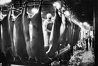 0093822 © Granger - Historical Picture ArchiveOSCAR MAYER: PORK, c1960.   Dressing pork carcasses at the Oscar Mayer plant in Wisconsin, c1960.