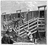 0053186 © Granger - Historical Picture ArchiveCATTLE DRIVE, 1874.   Cattle driven up from Texas being loaded on railroad cars at Wichita, Kansas, for shipment to the east. Wood engraving, American, 1874.