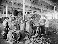 0324050 © Granger - Historical Picture ArchiveBOSTON: YARN FACTORY, c1912.   Men sorting and grading raw wool fleeces at the American Woolen Company in Boston, Massachusetts, c1912.