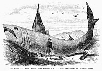 0093669 © Granger - Historical Picture ArchiveFANTASTICAL FISH, 1868.   Wonderful fish, caught near Eastport, Maine. Wood engraving from an American newspaper of 1868.