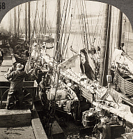 0093684 © Granger - Historical Picture ArchiveBOSTON: FISH PIER, c1890.   Fishing boat unloading halibut at dock, Boston Fish Pier, Massachusetts. Stereograph view, c1890.