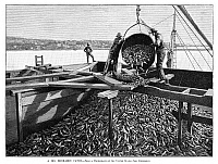 0267416 © Granger - Historical Picture ArchiveFISHING INDUSTRY, 1889.   'A big menhaden catch.' Engraving, 1889.