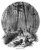0267295 © Granger - Historical Picture ArchiveMINNESOTA: LOGGING, 1870.   Lumberjacks sawing a felled tree into logs, in a Minnesota forest. Wood engraving, American, 1870.