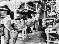 0118013 © Granger - Historical Picture ArchiveSUGAR PACKAGING.   Three men filling, weighing and sewing 25 pound sacks of C and H sugar at a factory in California. Photograph, early 20th century.