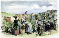 0081884 © Granger - Historical Picture ArchiveFRANCE: GRAPE HARVEST, 1854.   Harvesting grapes in Medoc, in the Bordeaux region of France. Wood engraving, English, 1854.
