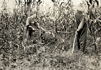 0176048 © Granger - Historical Picture ArchiveHINE: CHOPPING CORN, 1916.   Everett and Ora Adams chopping corn on a farm in Rockcastle County, Kentucky. Photograph by Lewis Hine, August 1916.