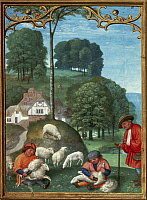 0026344 © Granger - Historical Picture ArchiveSHEARING SHEEP, c1515.   In June. Illumination from a Flemish Book of Hours.