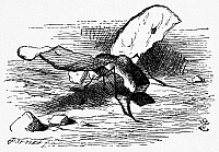 0118850 © Granger - Historical Picture ArchiveCARROLL: LOOKING GLASS.   The Bread-and-butter-fly discovered by Alice, whose wings are made of slices of bread and butter and head is a lump of sugar. Wood engraving after Sir John Tenniel for the first edition of Lewis Carroll's 'Through the Looking Glass,' 1872.