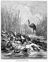 0040869 © Granger - Historical Picture ArchiveAESOP: CRANE AND FROGS.   The Crane King eating the frogs, in Aesop's fable 'The Frogs Who Asked for a King.' Wood engraving, 19th century, after Gustave Doré.