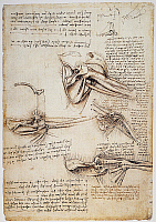0033662 © Granger - Historical Picture ArchiveLEONARDO: SHOULDER, c1510.   Pen and ink studies by Leonardo da Vinci, c1510, of the human shoulder.