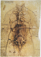 0033664 © Granger - Historical Picture ArchiveLEONARDO: ANATOMY, c1510.   Pen and ink study by Leonardo da Vinci, c1510, of the female anatomy.