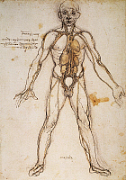 0033666 © Granger - Historical Picture ArchiveLEONARDO: ANATOMY, c1494.   General scheme of the system of vessels in the human body: pen and ink study, c1494, by Leonardo da Vinci.