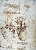 0033669 © Granger - Historical Picture ArchiveLEONARDO: HEART, c1512.   Studies of an ox heart by Leonardo da Vinci, c1512, pen and ink.