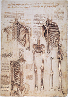 0033671 © Granger - Historical Picture ArchiveLEONARDO: THORAX, c1510.   Pen and ink studies by Leonardo da Vinci, c1510, of human thorax, pelvic, and leg bones.