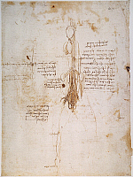 0035656 © Granger - Historical Picture ArchiveLEONARDO: HORSE, c1492.   Pen and ink study, c1492, by Leonardo da Vinci of a horse's anatomy, possibly in preparation for his equestrian statue of Francesco Sforza.