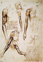 0045648 © Granger - Historical Picture ArchiveLEONARDO: ANATOMY, c1510.   Pen and ink studies by Leonardo da Vinci, c1510, of the muscles of the arm and the superficial vessels.
