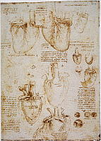 0045650 © Granger - Historical Picture ArchiveLEONARDO: ANATOMY, c1512.   Pen and ink studies by Leonardo da Vinci, c1512, of an ox heart.