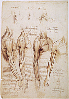 0047347 © Granger - Historical Picture ArchiveLEONARDO: ANATOMY, c1510.   Pen and ink studies by Leonardo da Vinci, of the muscles in the arm, shoulder, and neck, c1510-11.