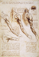 0047703 © Granger - Historical Picture ArchiveLEONARDO: ANATOMY, 1510.   Pen and ink studies of the human arm, shoulder, and neck by Leonardo da Vinci, c1510-1511.