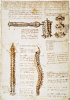 0047704 © Granger - Historical Picture ArchiveLEONARDO: ANATOMY, c1510.   Pen and ink studies of the human spinal column by Leonardo da Vinci, c1510-11.