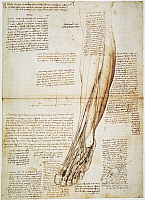 0047705 © Granger - Historical Picture ArchiveLEONARDO: ANATOMY, 1510.   Pen and ink study by Leonardo da Vinci, 1510, of the human lower leg.