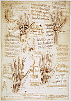 0047706 © Granger - Historical Picture ArchiveLEONARDO: HANDS, c1510.   Pen and ink studies by Leonardo da Vinci, c1510-11, of the human hand.