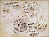 0062328 © Granger - Historical Picture ArchiveLEONARDO: VENTRICLES, c1508.   Pen and ink drawing, c1508, by Leonardo da Vinci of the cerebral hemispheres and ventricles.