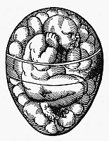 0104740 © Granger - Historical Picture ArchiveHUMAN FETUS, 16th CENTURY.   A human fetus forming inside an egg. Woodcut, 16th century.