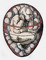 0104741 © Granger - Historical Picture ArchiveHUMAN FETUS, 16th CENTURY.   A human fetus forming inside an egg. Woodcut, 16th century.