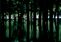 0162865 © Granger - Historical Picture ArchiveMISSISSIPPI RIVER: FLOOD.   Trees surrounded by flood waters from the Mississippi River at Hannibal, Missouri. Photographed c1974.