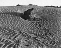 0027756 © Granger - Historical Picture ArchiveDUST BOWL, 1936.   Farmland in Texas eroded by dust storms as a result of overgrazing, 1936.