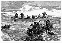 0088245 © Granger - Historical Picture ArchiveWALRUS HUNT, 1877.   'A Walrus Hunt in the Arctic Regions.' Line engraving, American, 1877.