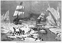 0088400 © Granger - Historical Picture ArchiveSEAL HUNT, 1881.   'Seal-Hunting in the Northern Seas.' Wood engraving, American, 1881.