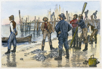 0089655 © Granger - Historical Picture ArchiveFISHERMEN, 1884.   Long Island fishermen dividing up the day's catch. Wood engraving, American, 1884, after Arthur Burdett Frost.