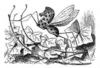 0033140 © Granger - Historical Picture ArchiveCARROLL: LOOKING GLASS.   The Rocking-horse-fly, one of the glass insects discovered by Alice. Illustration by John Tenniel from the first edition of Lewis Carroll's 'Through the Looking Glass,' 1872.