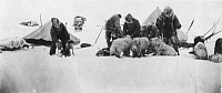0047140 © Granger - Historical Picture ArchiveFRIDTJOF NANSEN (1861-1930).   Norwegian arctic explorer and statesman. Nansen's 1893-96 polar expedition making ready for a start on a sledge as they leave the expedition's ship