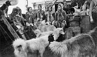 0175564 © Granger - Historical Picture ArchivePEARY EXPEDITION, c1908.   Inuits and sled dogs on board Robert Peary's ship during an Arctic expedition. Photograph by Matthew Henson, c1908.
