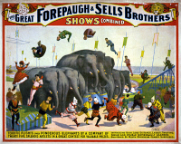 0124696 © Granger - Historical Picture ArchiveCIRCUS POSTER, c1899.   American poster, c1899, for Forepaugh & Sells Brothers Circus, featuring acrobats jumping over a group of elephants.