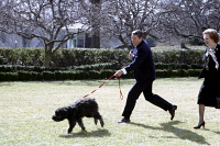 0350031 © Granger - Historical Picture ArchiveRONALD REAGAN (1911-2004).  40th President of the United States. Walking his dog Lucky with Prime Minister Margaret Thatcher in the Rose Garden. Photograph, 20 February 1985.