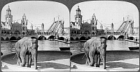 0106025 © Granger - Historical Picture ArchiveCONEY ISLAND: LUNA PARK.   'The elephant now goes round,' varied sights and shows at Luna Park amusement park, Coney Island, Brooklyn, New York. Stereograph, c1904.