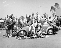 0129424 © Granger - Historical Picture ArchiveCOLLEGIATE FUN, 1959.   38 fraternity members at Long Beach, California, State College trying to cram into a Volkswagen, April 1959.