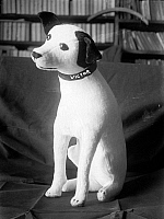 0322205 © Granger - Historical Picture ArchiveRCA VICTOR TOY, c1900.   A stuffed toy of Nipper, the RCA Victor mascot. Photograph, c1900.
