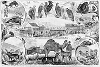0265967 © Granger - Historical Picture ArchiveCENTRAL PARK ZOO, 1866.   'Zoological Garden, Central Park, N.Y.' Engraving, 1866.