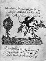 0122157 © Granger - Historical Picture ArchiveKALILA WA DIMNA.   A raven holding a rat by the tail and flying over a tortoise in a lake, from the Story of the Dove, from the Arab version of the traditional Sanskrit collection of fables, Kalila wa Dimna, by 'abd Allah ibn al-Moqaffa, 1220-1230.