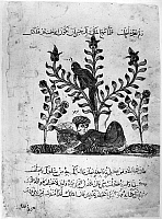 0122161 © Granger - Historical Picture ArchiveKALILA WA DIMNA.   Monkey picking fruit for the sleeping traveler, from the Story of the Traveler and the Jeweler, from the Arab version of the traditional Sanskrit collection of fables, Kalila wa Dimna, by 'abd Allah ibn al-Moqaffa, 1220-1230.