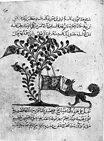 0122165 © Granger - Historical Picture ArchiveKALILA WA DIMNA.   Jackal comes across a drum attached to the branch of a tree, from the story of the Lion and the Bull, from the Arab version of the traditional Sanskrit collection of fables, Kalila wa Dimna, by 'abd Allah ibn al-Moqaffa, 1220-1230.